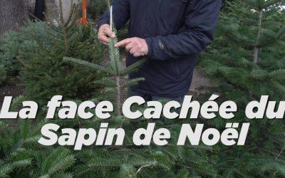 Sapin de Noël bien le choisir – VNA 04 12 2020 Vienne Actu